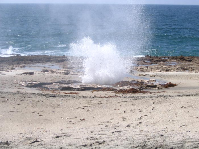 Blowhole doing it's thing